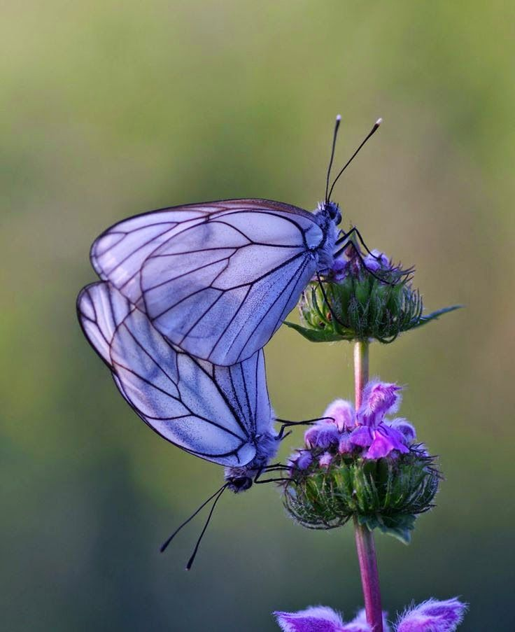 Purple butterfly nature insects