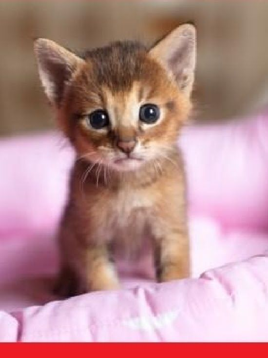 Best 25+ Cute Kitten Videos Ideas On Pinterest