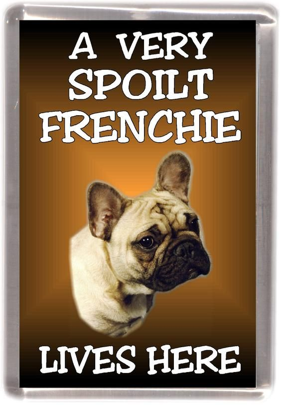 French Bulldog Fridge Magnet A Very Spoilt Frenchie Lives Here Great Gift For Any Dog Lover French Bulldog Dog Lovers Dogs