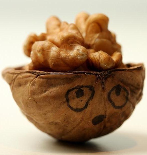 9 alimenti che somigliano agli organi che curano - Ambiente Bio