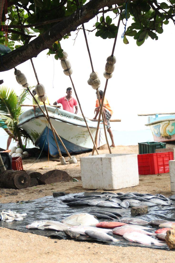 Vis, vismarkt bij Galle, Sri Lanka