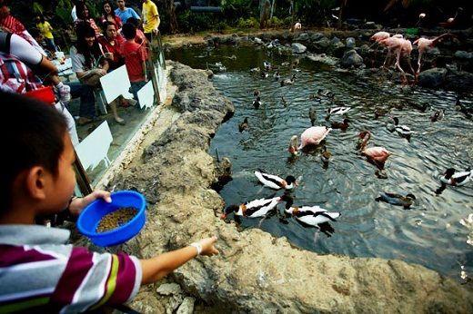 Batu Secret Zoo, an international standard zoo located in Batu Malang.