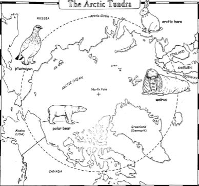 A few activities using a map of the Arctic tundra with countries and animals of the area identified. What is the Arctic Tundra? Name a...