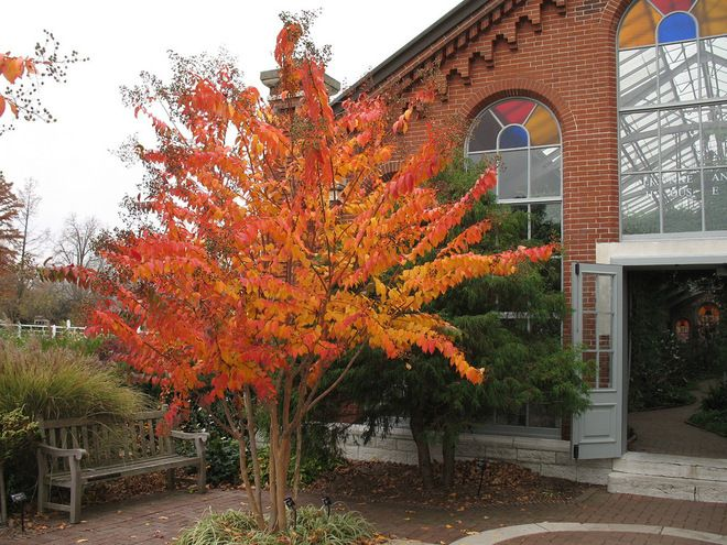 Crape Myrtle. Good Fall Color, Good For Small Spaces With