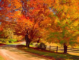 "Ready for Mother Nature's spectacular autumn show? Travel Channel is kicking off fall with the debut of our ""Travel's Best"" lists. Our panel of expert advisors -- from veteran travel host Samantha Brown to long-term weather forecasters weathertrends360 – gave us their stamp of approval for the 10 best fall foliage road trips."