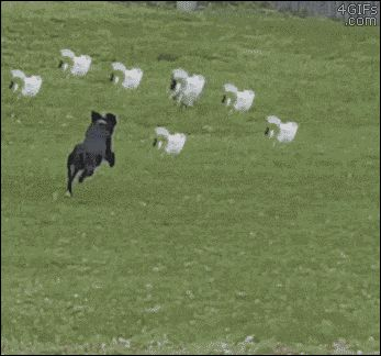 Dog-chases-cats-synchronized-escape