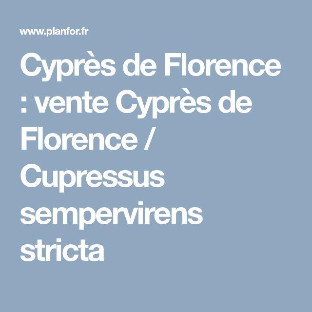 Cyprès de Florence : vente Cyprès de Florence / Cupressus sempervirens stricta
