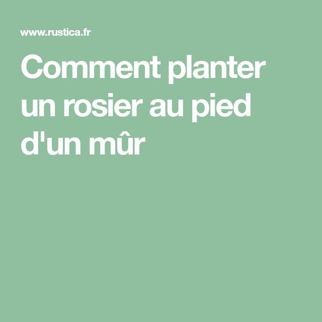 Comment planter un rosier au pied d'un mûr