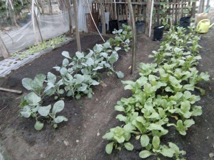 Kebun kecil ku