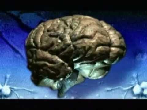 en este video observaras el sistema nervioso y sus partes