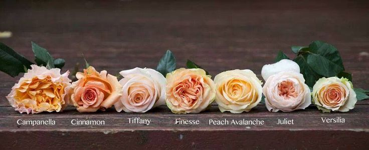 Different types of Garden Roses