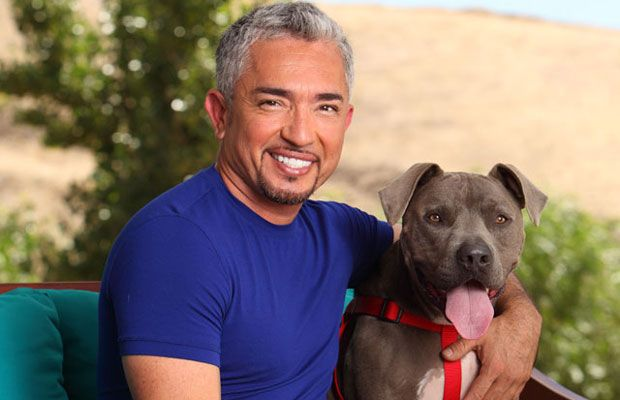 Yes, I do have a crush on Cesar Millan <3