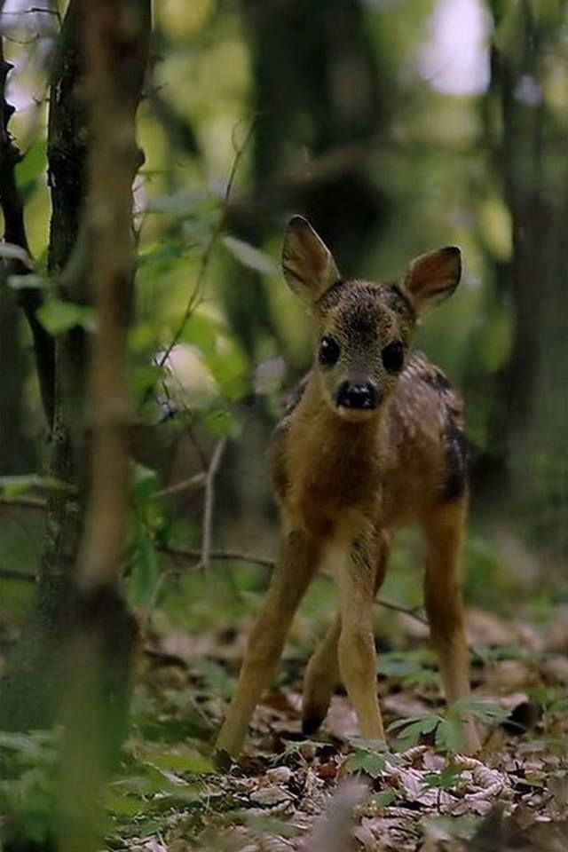 """""""A Wide-Eyed Fawn."""""""