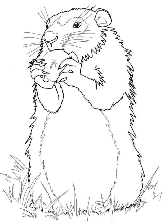 Realistic Groundhog Coloring Page Animal Coloring Pages