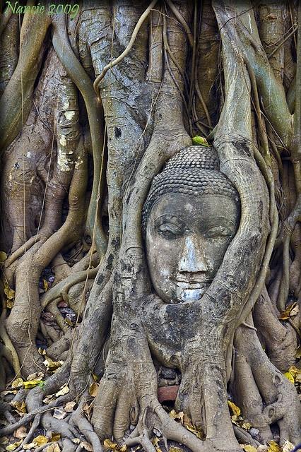 Buddha head in bodhi tree, ruins of Wat Mahathat, Ayutthaya, Thailand