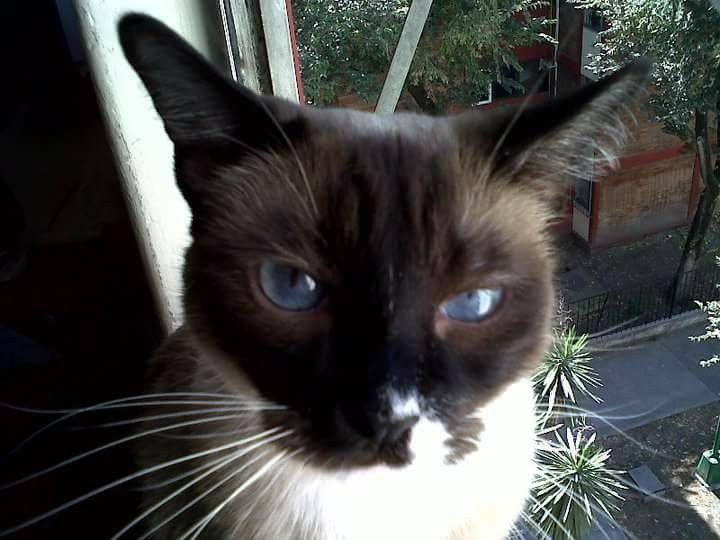 Una tita  de ojos  azules