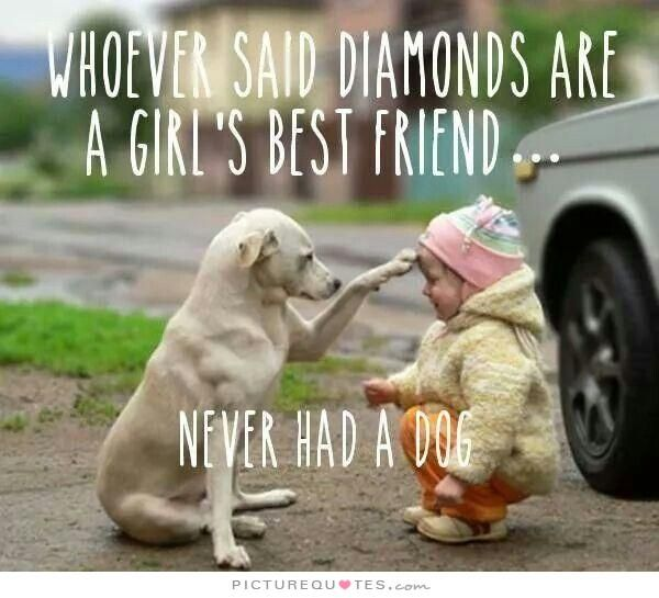 Whoever Said Diamonds Are A Girl's Best Friend Never Had A Dog Best Extraordinary Quotes About Dog Friendship