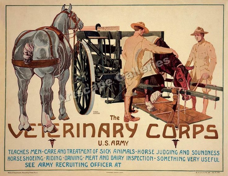 WWI Veterinary Corps Classic Horse Poster 32x24 #Vintage