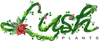 Lush Online Plants Nursery Australia - Buy tropical plants, edibles and Rare Plants online