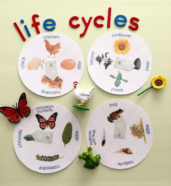 Ruedas de ciclo de vida para la educación de naturaleza