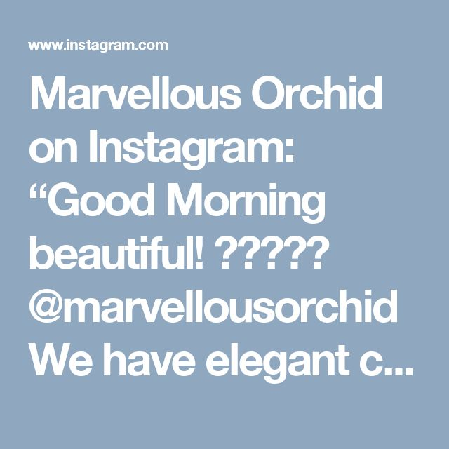 """Marvellous Orchid on Instagram: """"Good Morning beautiful! 🇿🇦✨💛✨ @marvellousorchid We have elegant ceramics perfect for any orchid 🤗😽💕 be sure not too miss them on your way…"""" • Instagram"""