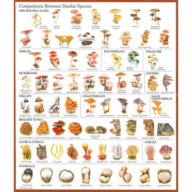 Magic Mushroom Identification Chart