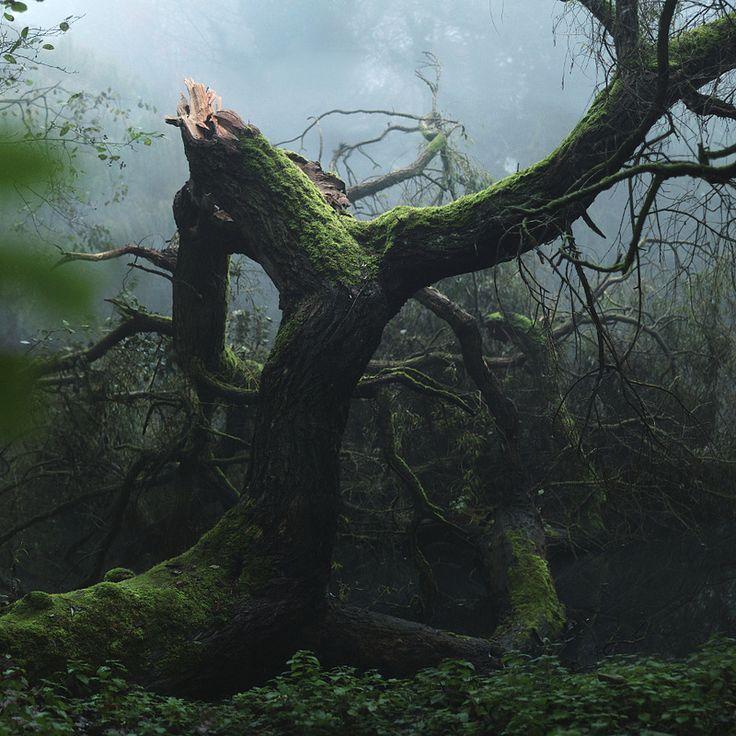 By Luna G. #nature #tree #mist #moss