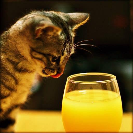 cat and orange