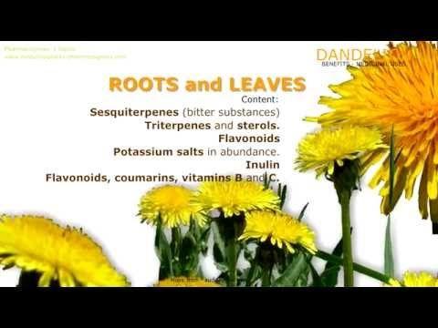 Pharmacognosy´s topics, Medicinal plants - Pharmacognosy - Medicinal Plants