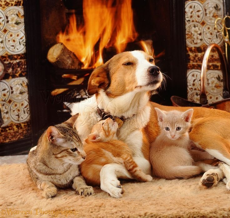 Best House Ctas That Coexist With Dogs