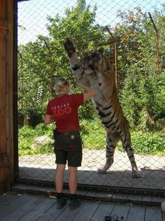 Odense Zoo Reviews - Odense, Funen and Islands Attractions - TripAdvisor