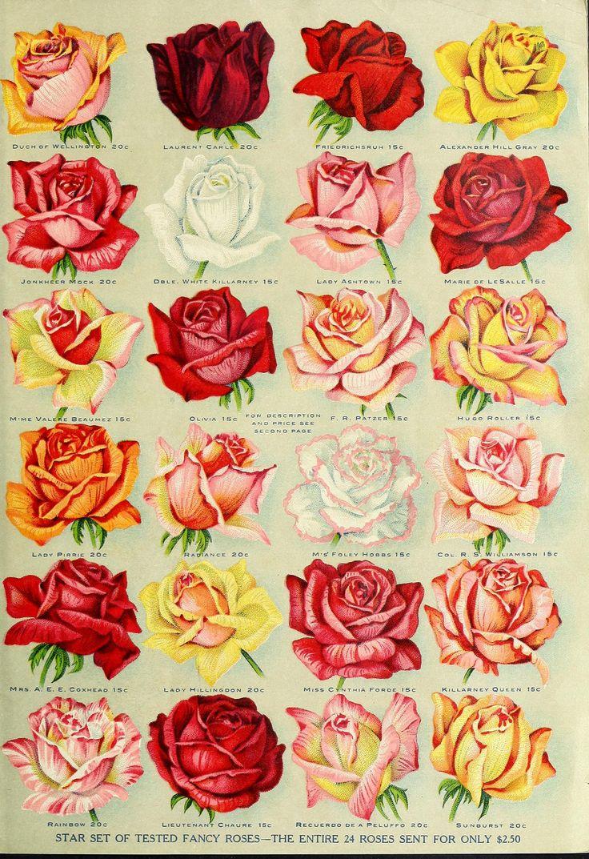 453 best images about etude de fleur on pinterest | hand drawn