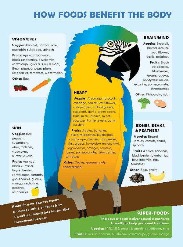 Food for Parrots | Parrot Food Infographic | Macaw Parrot Health | Pet Birds | Conure |  La Beℓℓe ℳystère | Cockatoo | Cockatiel | Senegal | Lovebird | Parakeet