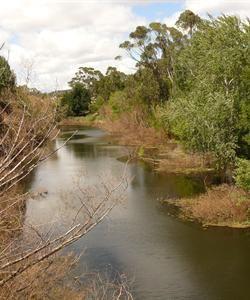 Queanbeyan River Restoration Project - Queanbeyan City Council