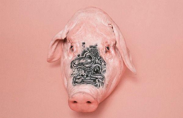 Peter Garritano, fotógrafo neoyorquino, sorprendió a algunos artistas del tatuaje invitándolos a imprimir su estilo en estas cabezas de cerdo...