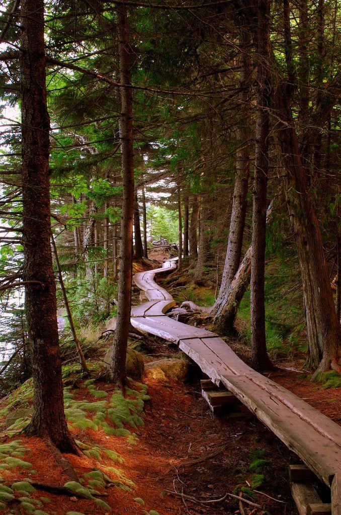 Forest trail in Jordan Pond Loop, Acadia National Park, Maine.