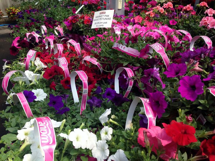 If you pick a petunia... pick wave! Trailing & hardy and spreadable. Look at these solid colors.