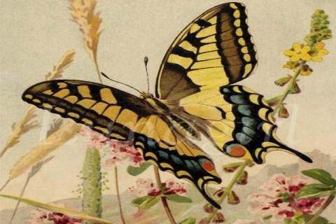 Pink vintage butterfly background - photo#48