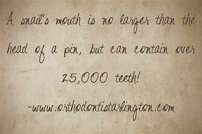 Snail's and their mouths.   orthodontistarlington.com