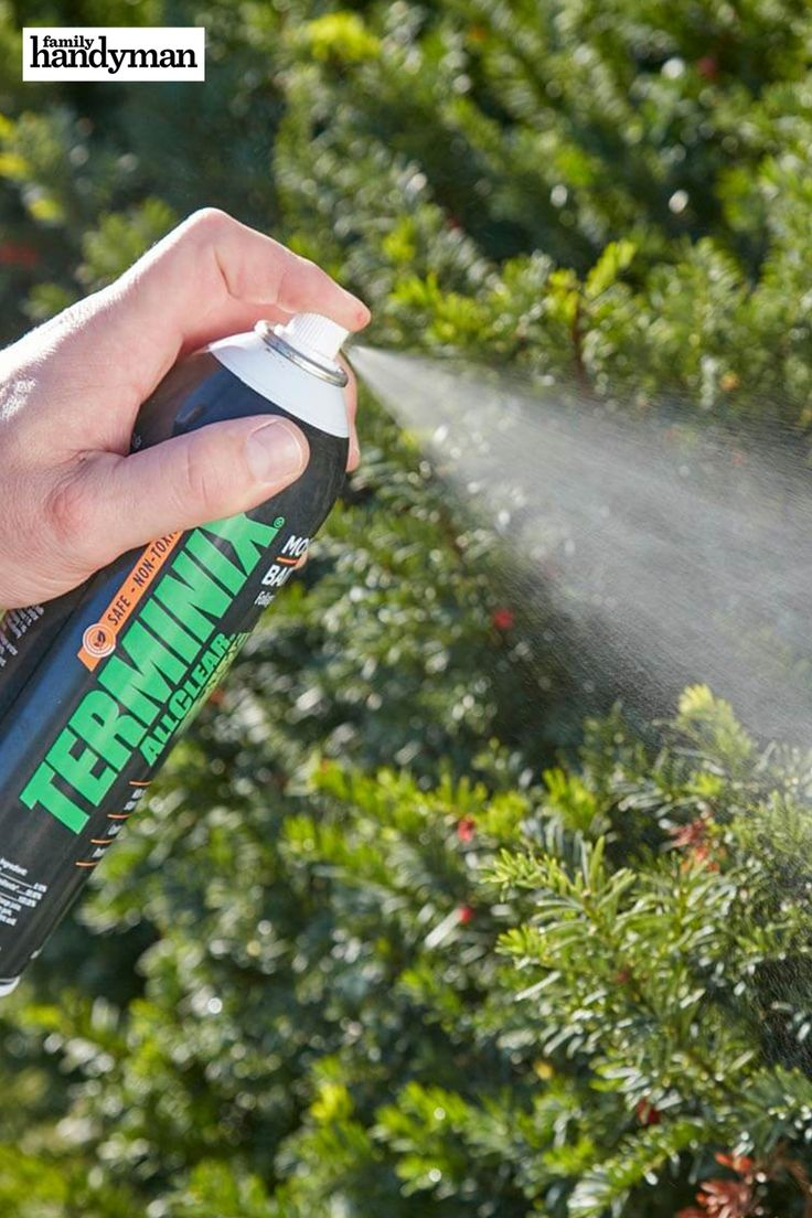 how often to fertilize lawn in michigan