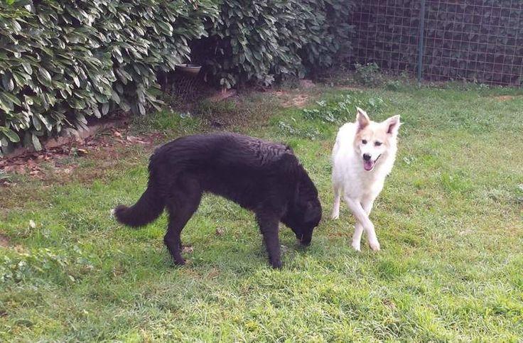 Adozione Daisy (la bianca) e Kika