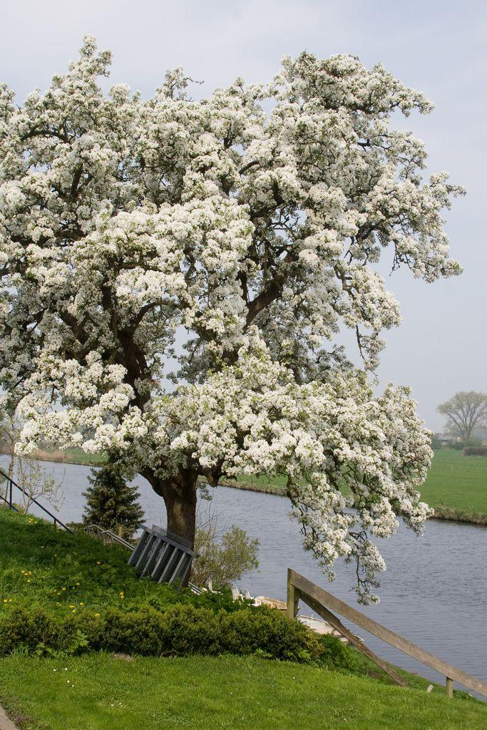Lingedijk, Zuid-Holland.
