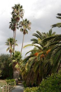 Giardini Botanici Hanbury-92