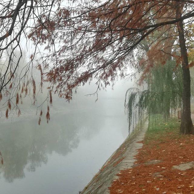 Der Herbst ist da  #timisoara #bega #herbst #toamnă