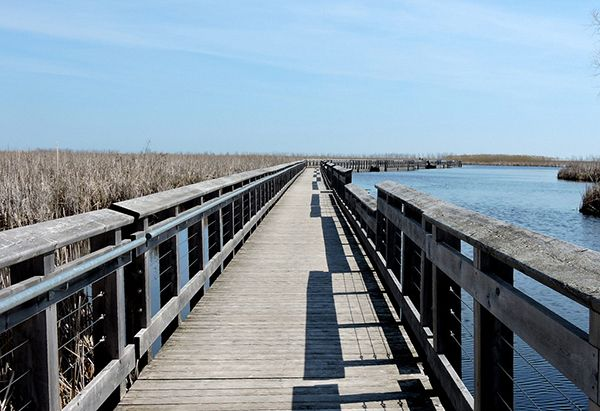 Ontario: Toronto to Point Pelee National Park and Chatham-Kent