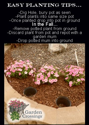 """Easy planting tips...   Simply """"plant"""" a pot in the ground, take the same size pot and plant it, once planted drop that pot into the pot in the ground. When fall comes or when you are ready for a change, simply pull the plant and pot fro ground, replant the pot and drop back into the ground. A very quick and easy planting tip that only requires a hole to be dug once. Great for landscapes with rocks or wood chips. You don't have to worry about dirt getting in the rocks and making a mess."""