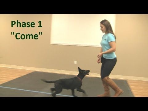 ▶ Best way to teach a puppy to come when called (K9-1.com) - YouTube