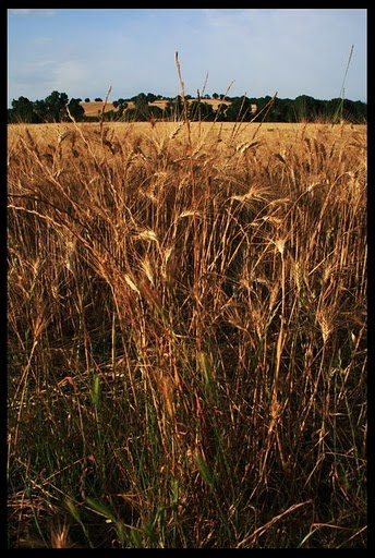 Maremmana, Vita Toscana