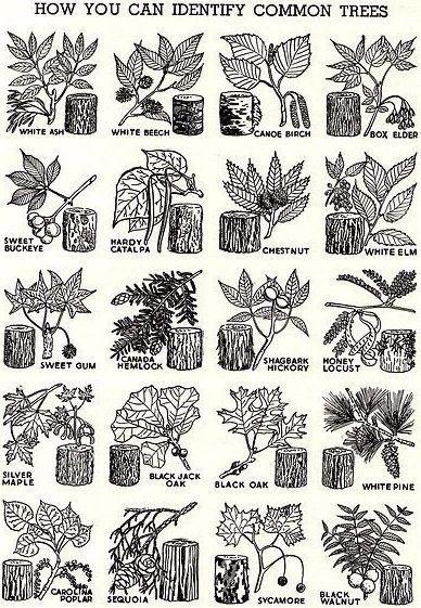 Tree identification                                                                                                                                                      More