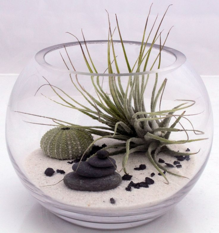 Small desktop zen garden terrarium kit with live Tillandsia fushsii air plant, white sand, sea urchin and stone stack- round fish bowl style. $44.00, via Etsy.